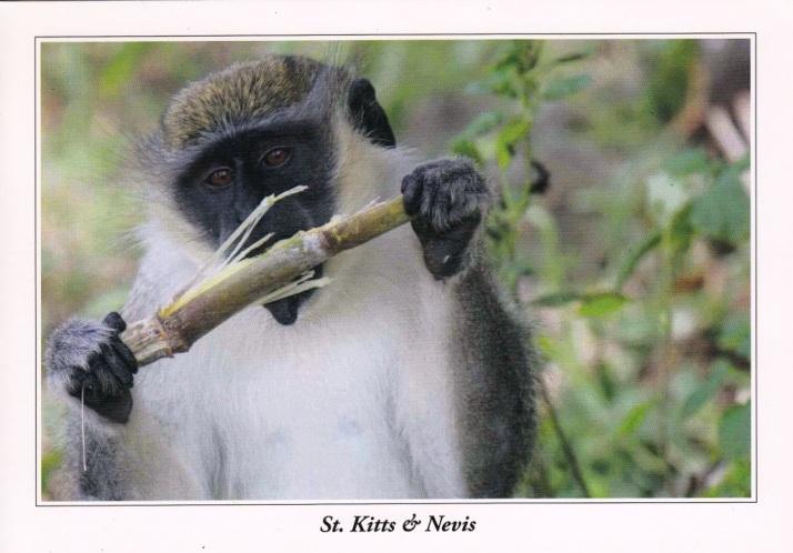 Saint Kitts-Nevis-3