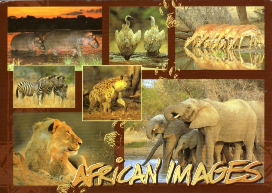 South-Africa-4