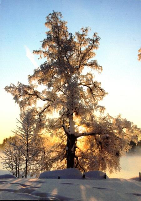 Finland-19